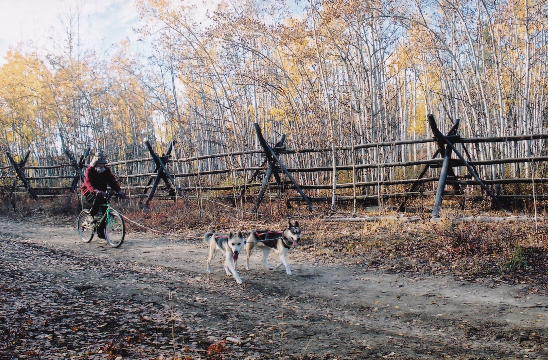 Mokka and Tonya of          Seppala bicycle lead dog training