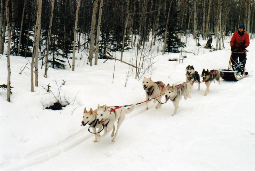 Seppalara and Sepalluna          lead Isa Boucher's 6-dog team at Seppala Kennels, Yukon in 1997
