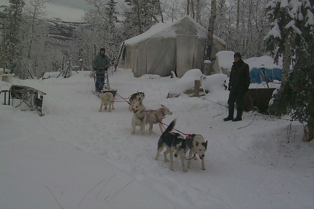 Yolanda of Seppala and Kolyma of Seppala,           experienced SSSD lead dogs, initiate a novice driver