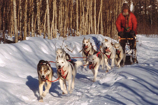 Sepalleo and Markobosco, Seppala Siberian Sleddog leaders