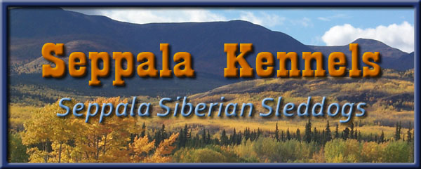 Seppala kennels is the last refuge of the authentic Leonhard Seppala Siberian Sleddog